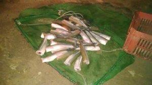 se-realizo-un-nuevo-operativo-contra-la-pesca-clandestina
